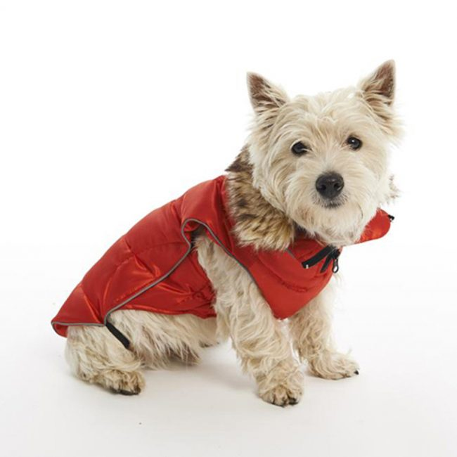 Buster—Active-Winter-Jacket-2
