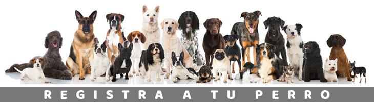 Registro Nacional de Mascotas Guia Fácil Perritorio