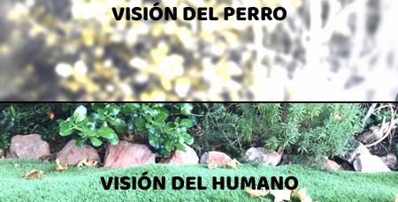 DIFERENCIA ENTRE LA VISIÓN DEL PERRO Y EL HUMANO