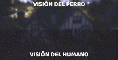 Visión nocturna del perro y el humano