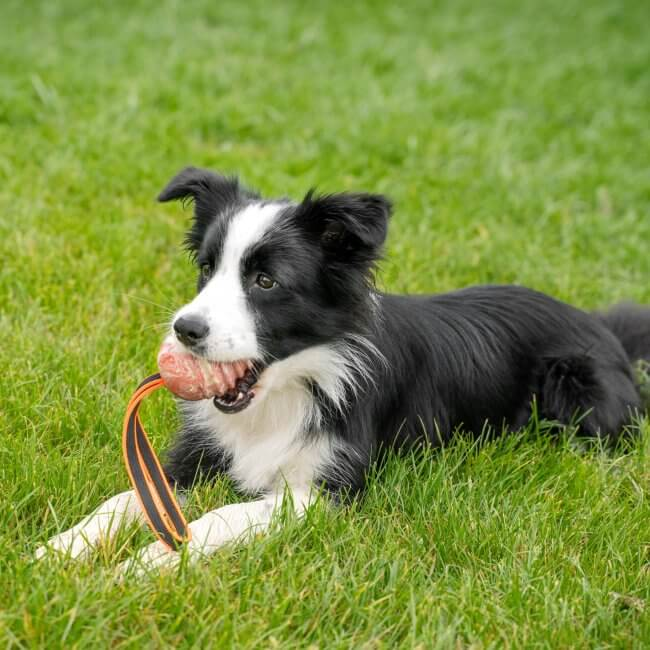 Pelota Pelota Duoplay Julius-K9® para todo tipo de perro